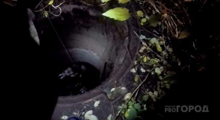 Скулила, поджав уши: история спасения собаки в Ярославле. Видео