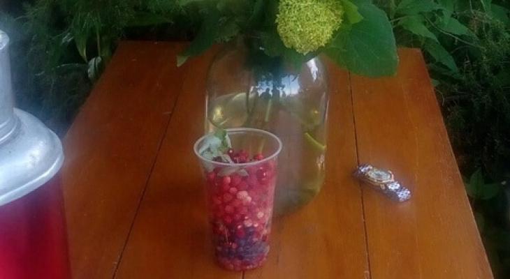В Ярославле будут выращивать малину и землянику на продажу для всей страны