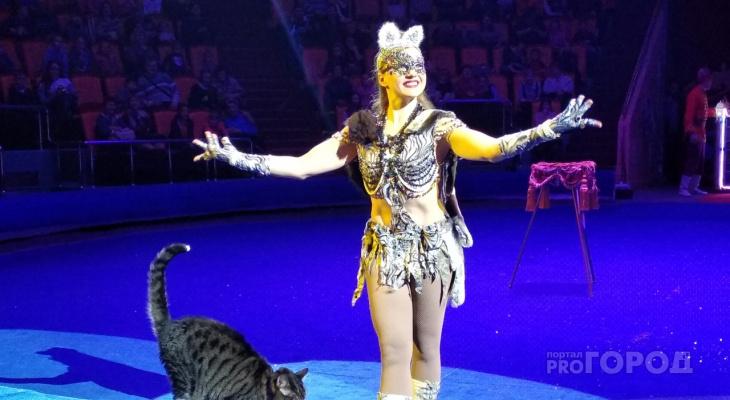 Медведи-канатоходцы, пираты и Дед Мороз: ярославцев приглашают на елку в цирк