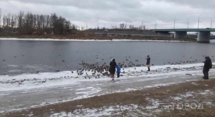 Мужчина открыл охоту на городских уток в Ярославле