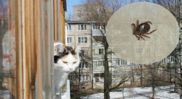 Почему прививать животных от клещей нужно зимой: совет ярославского ветеринара