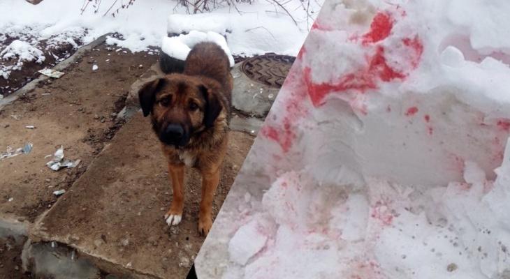 Догхантеры атакуют: чем опасен розовый снег, рассказали ярославцам