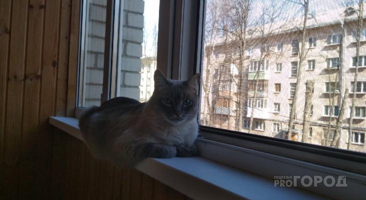 Открытая угроза: окна опасны для домашних животных