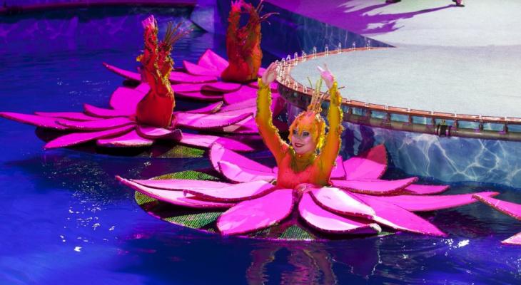 Удивительный «Цирк на воде» приехал в Ярославль