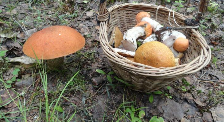 Уже пошли:  топ-5 грибных мест составили в Ярославле