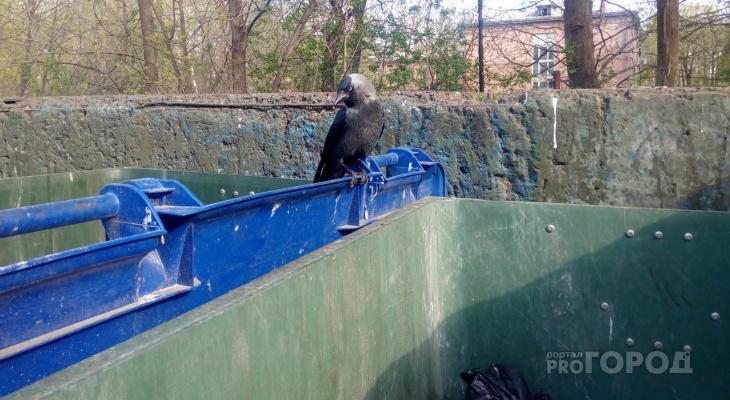 Льгота на мусор: ярославцам дадут скидку на вывоз