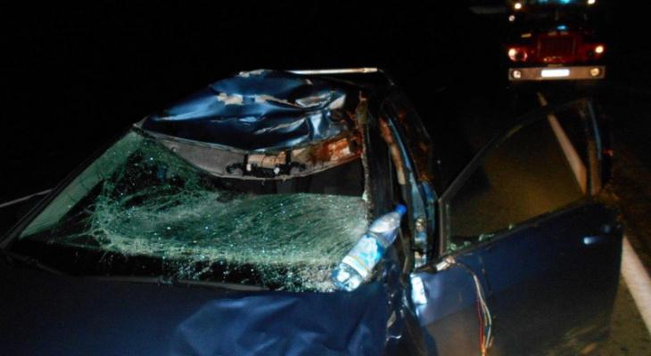 Ярославец пострадал в ДТП с лосем: подробности аварии