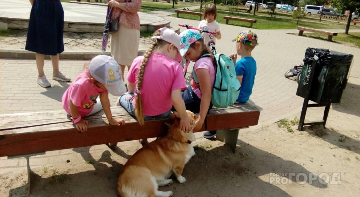 Лето ворвется в Ярославль: какую погоду ждать в выходные