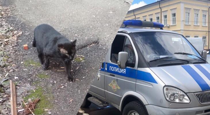 Их подставил Мурзик: ярославец из-за кота расстрелял людей в подъезде