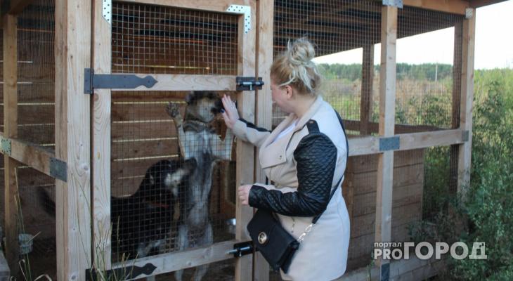 Департамент ветеринарии опроверг опасения о закрытии ярославских приютов для животных