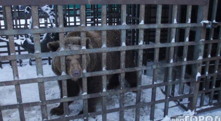 """""""Мы видели боль в глазах"""": в России исчезнут котокафе и мини-зоопарки"""
