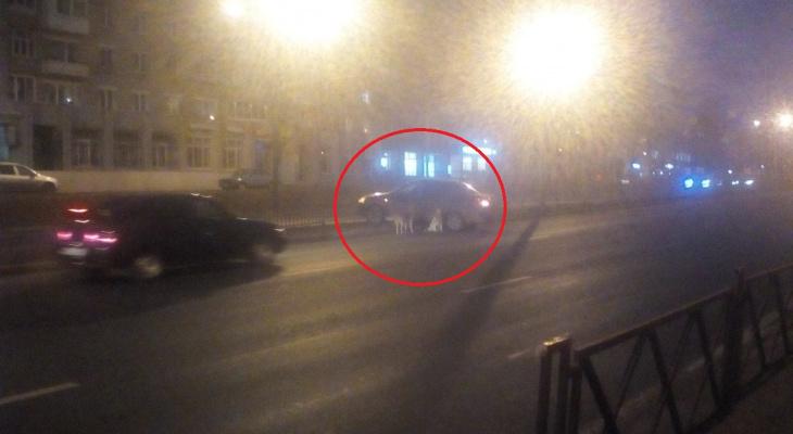 Ей раздробило позвоночник: ярославц разбил авто, спасая собаку