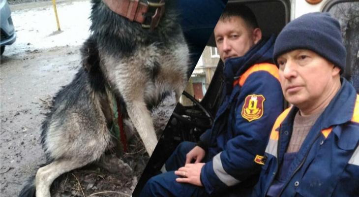 Накрутило на арматуру: история спасения бездомного пса в Ярославской области