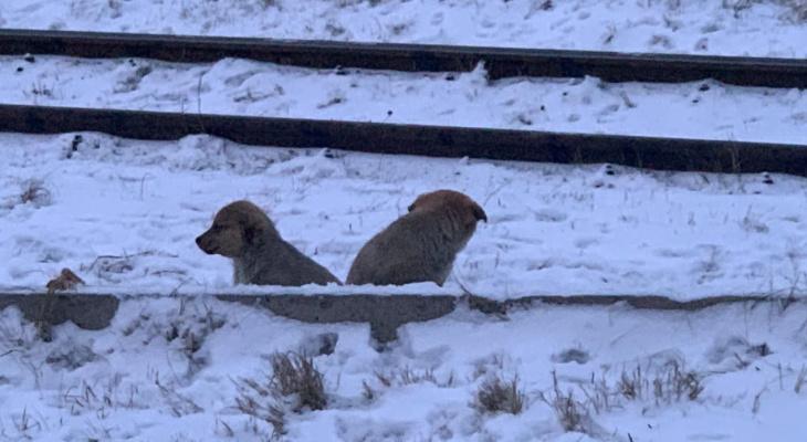 Умирают от холода: ярославна просит спасти замерзающих щенков