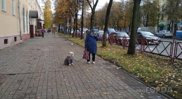 Ад для собачников: вводят новые правила содержания животных в Ярославле