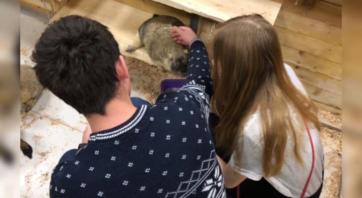 «Усыпят и выбросят на улицу»: в России хотят запретить контактные зоопарки