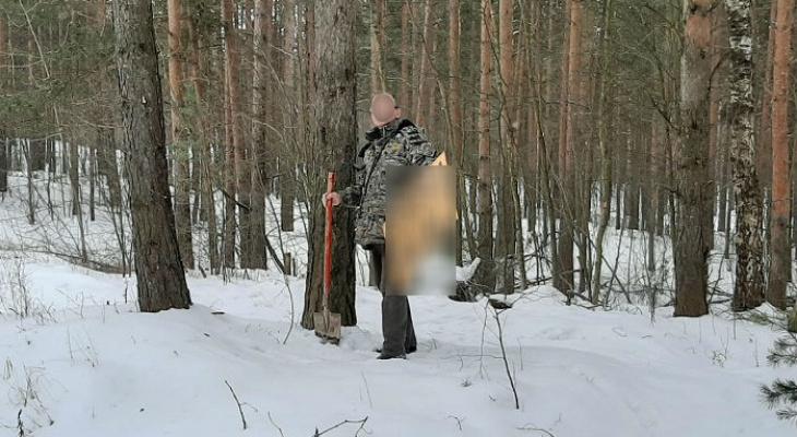 300 тысяч за дерево: власти штрафуют ярославцев после лесных рейдов