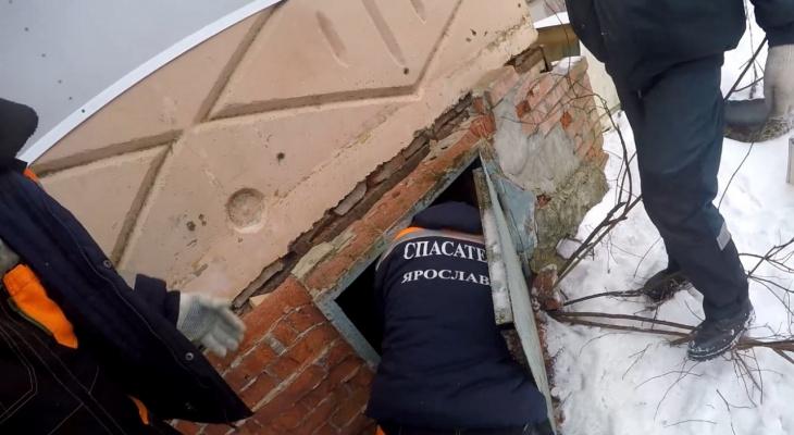 Скулил и просил помощи: пес оказался в двухметровой ловушке в Ярославле