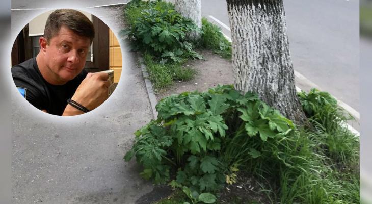 Теперь заброшен: любимый проспект экс-мэра Ярославля зарос ядовитым растением