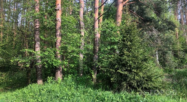 За ярославским лесом присмотрят: приняты меры против пожаров
