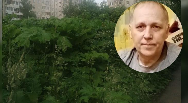 «Косить уже поздно»: ярославцы пристыдили власти из-за плантации борщевика около школы