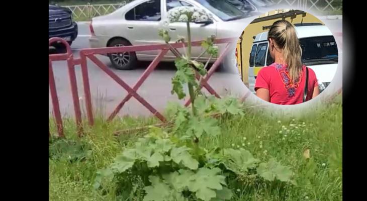 """""""Борщевик укусил за ногу"""": ядовитое растение нашли в центре Ярославля"""
