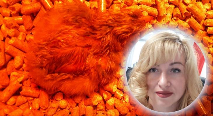 Депутат из Ярославля вывела цыплят в инкубаторе