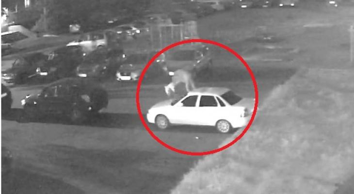 Громил и царапал машины на парковке: проделки автовандала попали на камеру. Видео