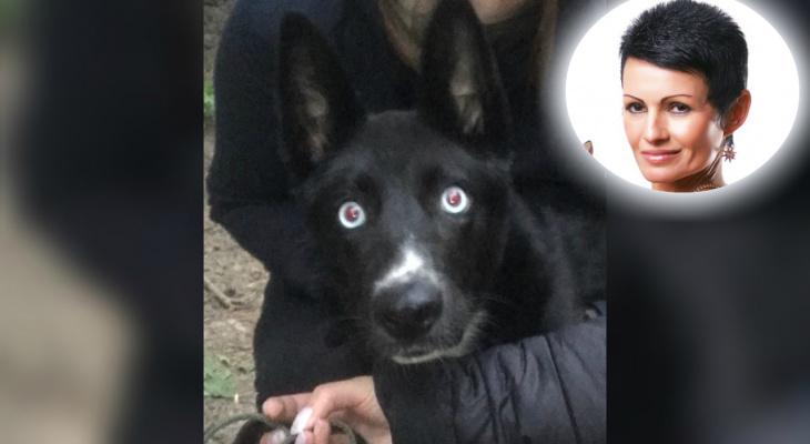 """""""В глазу лопнул сосуд"""": ярославский водитель два раза проехался по собаке"""