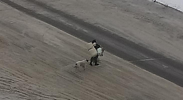 Дама с собачками: в Ярославле женщина живет с собаками в теплотрубах
