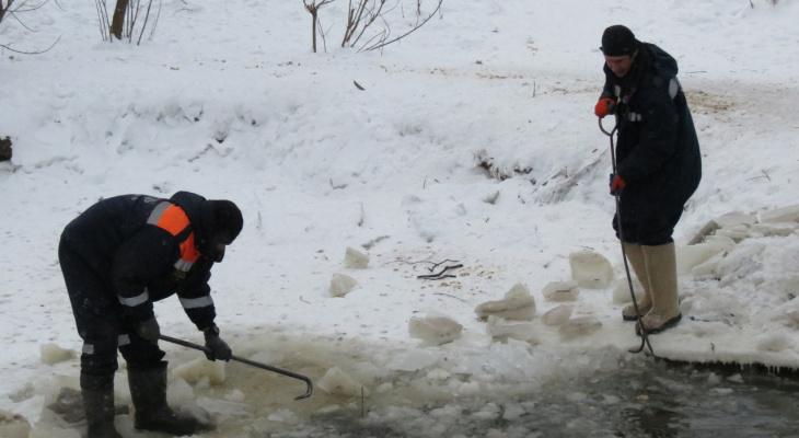 Были на грани смерти: в Ярославле спасатели пришли на помощь трехсот пятидесяти серым шейкам