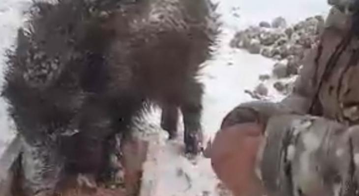 Маму убили браконьеры: ярославец выхаживает шестерых кабанят. Видео