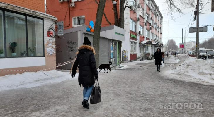 Вспышка бешенства домашних животных началась в Ярославле: кого бояться