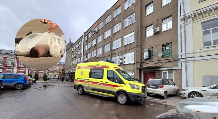 """""""Катали тело по земле"""": в Ярославской области быки убили мужчину"""
