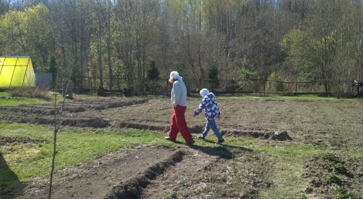 Плохие дачники будут платить: за сорняки полагается штраф