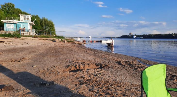 «Там нефть с глистами»: в Ярославле разразился скандал из-за купающихся в Волге собак