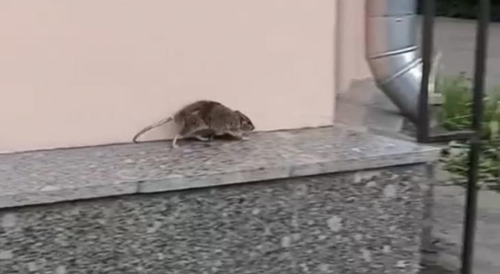 «Невеста чья-то убежала»: по центральному ЗАГСу бегала крыса. Видео