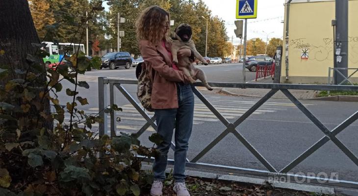 В Ярославле массово сносят заборы
